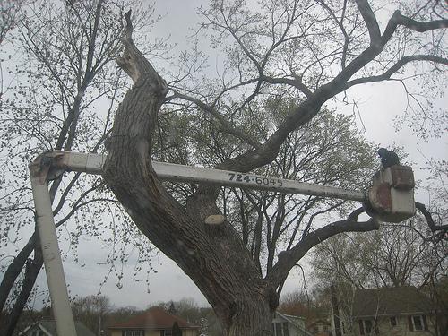 Tree Cutting Service Harringay