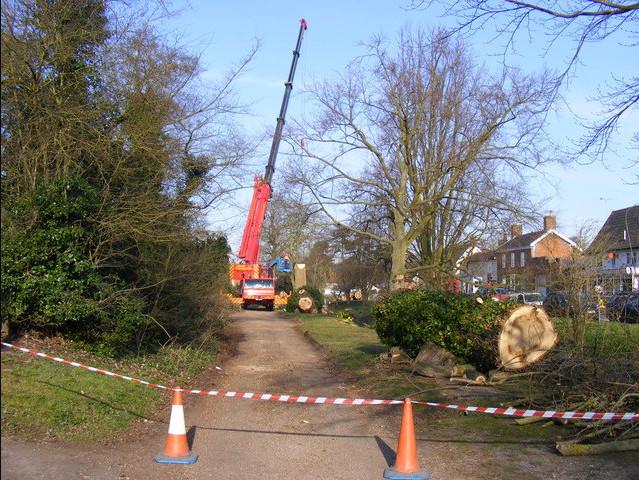 Tree Removal Harlesden