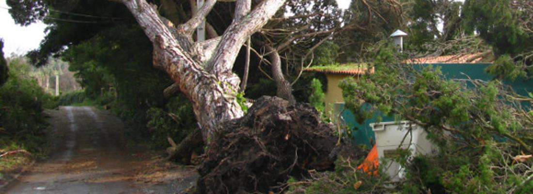 Tree Removal Mill Hill