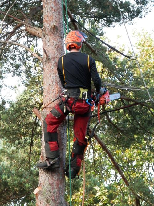 Tree Stump Removal Islington