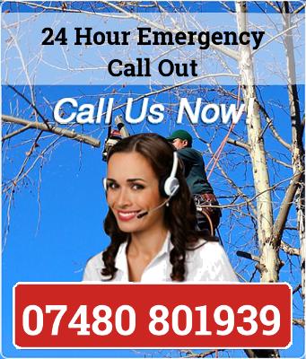 Tree Surgeon London call now